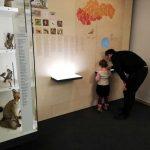muzea (7)