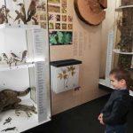 muzea (8)